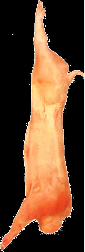 Canal sin cabeza